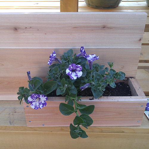 planter box with address numbers